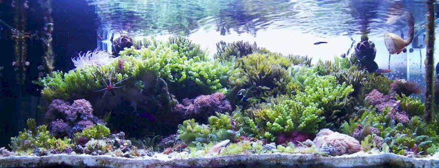 Aquascaping | Living Reefs